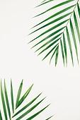 스틸라이프 (콤퍼지션), 식물, 여름, 잎 (식물부분), 아레카야자 (야자나무)