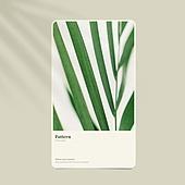 그래픽이미지, 목업 (이미지), 여름, 우편엽서 (편지)