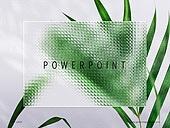 파워포인트, 메인페이지, 백그라운드, 글래스모피즘, 식물학, 유리, 투명, 깨끗함, 프레임, 야자잎
