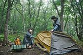 남성, 텐트, 여행, 산림, 캠핑 (아웃도어), 설치