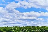 자연, 자연풍경 (교외전경), 풍경 (컨셉), 하늘풍경 (하늘), 하늘, 구름, 맑은하늘 (하늘), 뭉게구름