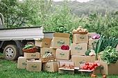 배달 (일), 냉장배송 (배달), 프레시, 상자, 채소, 농업 (주제), 유기농, 농작물, 산지직송 (배달)