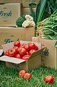 냉장배송 (배달), 프레시, 쇼핑 (상업활동), 상자 (용기), 포장, 채소, 농업 (주제), 수확 (움직이는활동), 농작물, 산지직송 (배달), 토마토