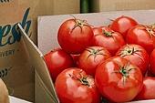 냉장배송 (배달), 채소, 수확 (움직이는활동), 유기농, 텃밭작물 (경작), 농작물, 산지직송, 토마토