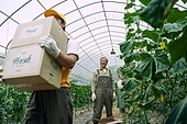 배달 (일), 냉장배송 (배달), 상자 (용기), 포장, 주문 (상업활동), 채소, 농업, 농부 (농촌직업), 산지직송 (배달), 택배배달부 (배달부)