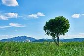 자연, 꽃, 식물, 풀 (식물), 구름, 풍경 (컨셉), 하늘, 하늘풍경 (하늘), 확트임 (풍경), 나무