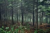 숲, 산림, 자연풍경
