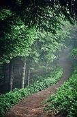숲, 산림, 자연풍경, 길, 둘레길
