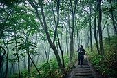 남성 (성별), 오솔길 (보행로), 산림, 여행, 백패커 (여행하기), 하이킹 (아웃도어), 걷기 (물리적활동)