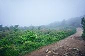 숲, 산림, 산길, 길