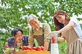 라이브커머스, 라이브방송, 인플루언서, 토마토, 산지직송, 유기농농장, 믹서 (식품가공기)
