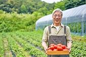 농부 (농촌직업), 토마토, 채소, 산지직송 (배달), 귀농, 시골풍경 (교외전경), 유기농, 농업 (주제), 농작물
