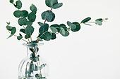 스틸라이프 (콤퍼지션), 식물, 유칼립투스나무 (열대나무)