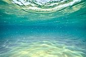 여행, 여름, 바다, 물 (자연현상), 수중 (Setting), 백그라운드, 깨끗함 (좋은상태)