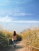 가을, 풍경 (컨셉), 감성, 여행, 갈대, 뒷모습