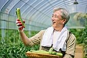 농부 (농촌직업), 채소, 산지직송, 농업, 채소밭, 경작, 귀농