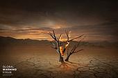 기후변화 (환경오염), 자연재해 (자연현상), 날씨, 환경이슈, 온난화, 사막화, 나무, 불꽃 (인조물건)