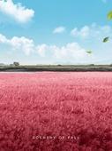 가을, 풍경 (컨셉), 초원 (자연의토지상태), 카피스페이스 (콤퍼지션), 감성, 여행, 핑크뮬리