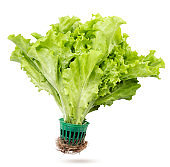 Green lettuce in a glass flies on a white background. Isolated