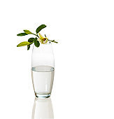 lily flower and bud on transparent glass vase