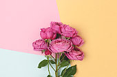 Bouquet of rose flowers on a colorful background.