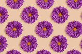Repetitive pattern made of purple dahlia flowers on a beige background.