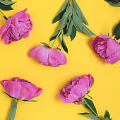 Composition with peony flowers on a yellow background.