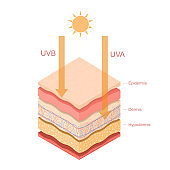 Cartoon Color Uvb Uva Rays Human Skin Layered Concept Template Banner Card. Vector
