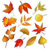 Decorative autumn leaves and twigs, vector set