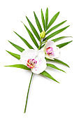 Fresh twig of blooming orchid flowers isolated on white background