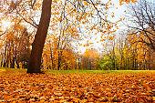 Autumn nature, autumn park landscape, autumn city park, yellow fallen leaves on the foreground. Scenic autumn park