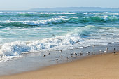 Seascape and flock of birds on the beach. Beautiful sunny day, turquoise colored sea, mountains and clear blue sky background