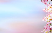 Spring banner, branches of blossoming cherry against background of blue sky