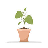 Seedling of cucumbers in a pot. Growing gardening plants. Vegetarian and ecological products. Vector illustration in flat cartoon style