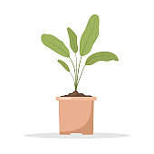 Spring seedling in pots. Growing gardening plants. Vegetarian and ecological products. Vector illustration in flat cartoon style