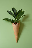 Peony leaf in a waffle cone. Summer concept.