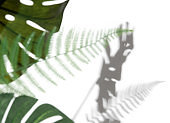Monstera leaf and fern leaf with shadows on a white wall,Summer background,Blurred abstract background