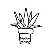 Single hand drawn succulent. Vector illustration in doodle style. Isolate on a white background.