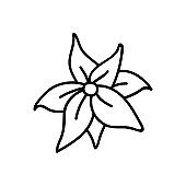 Single hand drawn poinsettia. Vector illustration in doodles style. Isolated on white background.