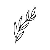 Single hand drawn twig. Vector illustration in doodle style. Isolate on a white background.