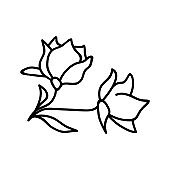 Single hand drawn magnolia. Vector illustration in doodle style. Isolate on a white background.