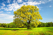 Green fresh grass and leaves on trees in springtime. Beautiful nature landscape of greenfield in early spring