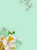 alstroemeria flower frame