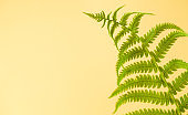 Summer tropical background with green fern. Copy space. Flat lay.