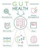Gut health vertical poster. Editable vector illustration