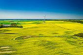 Rape fields and wind turbine. Agriculture and alternative energy, Poland.