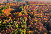 Red autumn forest. Aerial view of rainforest in Poland.