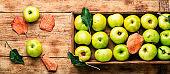 Harvest green apples