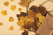 Top view photo of open leather handbag with scattered yellow and brown autumn leafage on isolated beige background