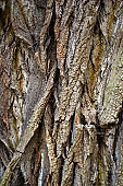 Texture of the bark of an old tree.